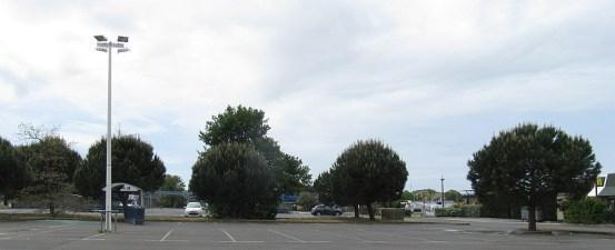 Drzewa na parkingu - w PL nie do pomyślenia - liście niszczą lakier