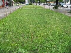 Łąka kwietna przy Marszałkowskiej