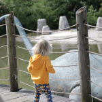 My Wild Ones // Lions and tigers and dinosaurs at Blackpool Zoo