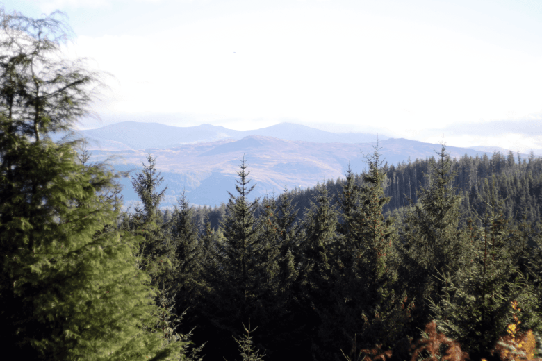 The view from Whinlatter Forest