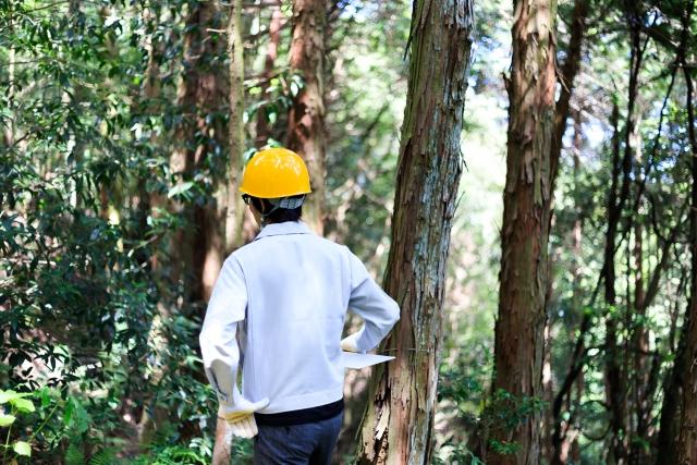 山林売却における注意点