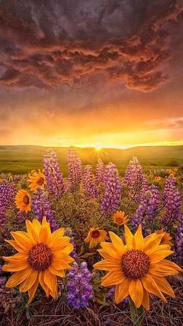 """Цветы картинка на телефон – Скачать бесплатно """"Цветы ..."""
