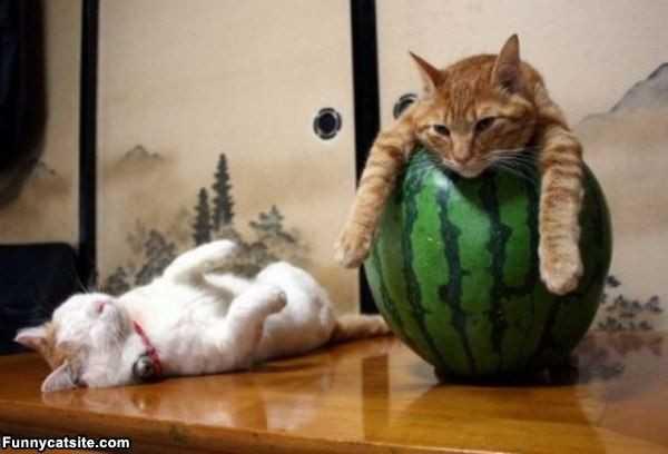 Фото кошек и котят и котов – Смешные и просто красивые ...