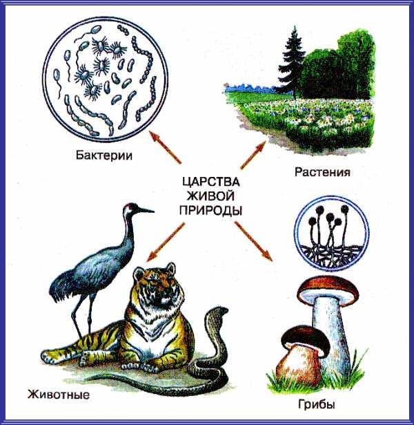 Фото неживої природи – Картинки про неживую природу (27 ...