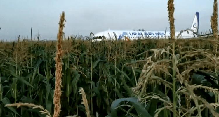 Чудо на кукурузном поле: при авиакатастрофе А-321 выжили все 233 человека