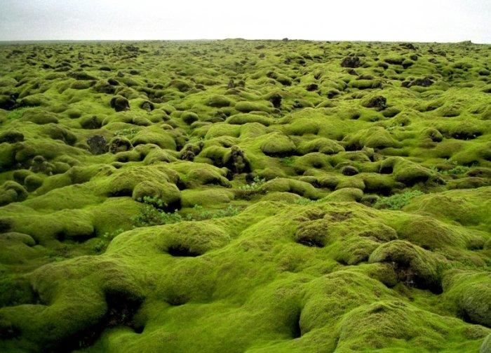 iceland-lava-field