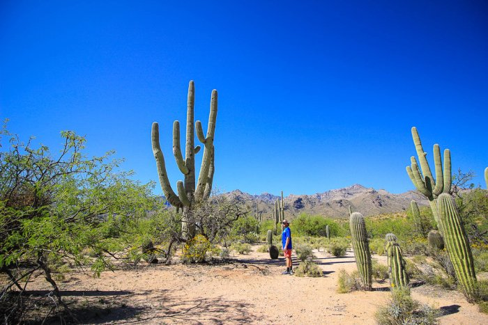Sabino+Canyon+National+Forest,+Tucson+Arizona,+NuventureTravels.com,+Saguaro+Cactus,+Desert