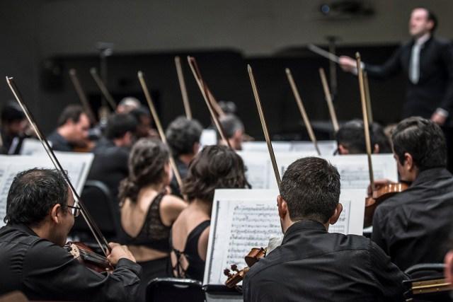 Violines_porPatricioMeloCEAC