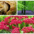 Fondos de pantalla de flora y fauna