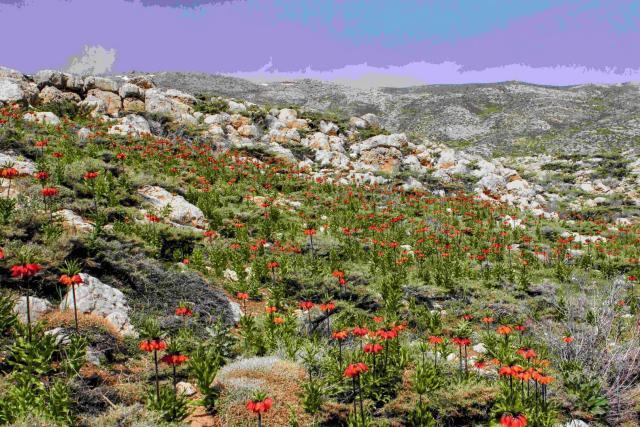 Fondos de pantalla de flora y vegetación