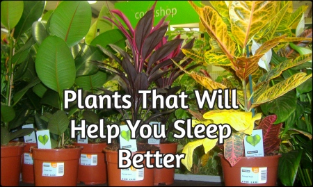 These-5-Plants-Will-Help-You-Sleep-Better
