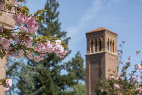 Spring blossoms begin to show near Trinity Commons.