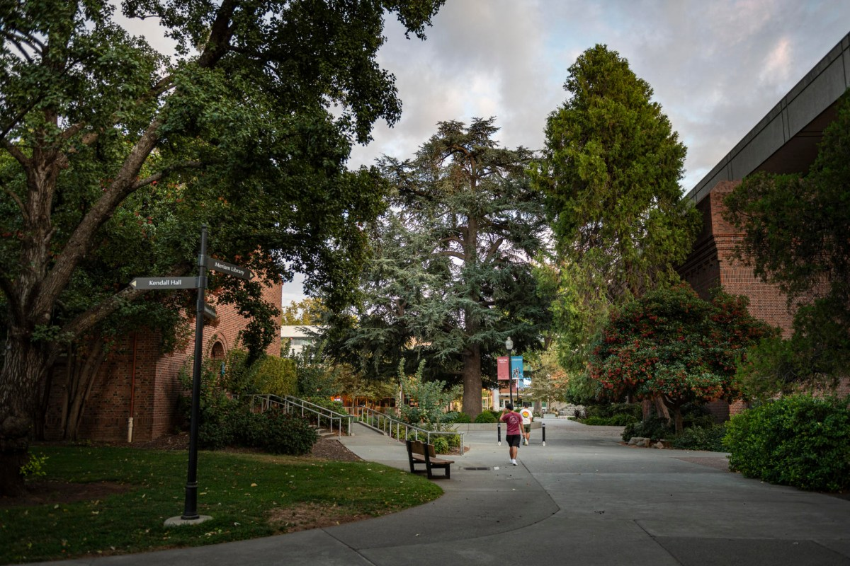 Students walk on a Chico State walkway flanked by tall trees.