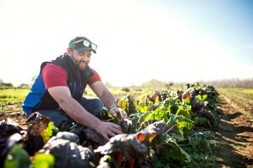 Chico State student Eduardo Puentes tends to the crops at the Organic Vegetable Project space at the University Farm. Chico State is a leader in the field of regenerative agriculture and is hosting a regional conference this weekend at the University Farm.