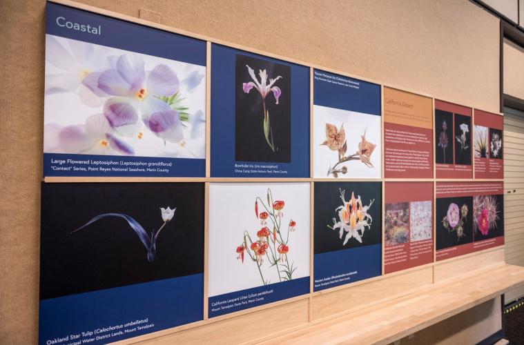 "One of the Gateway Science Museum's new exhibits, ""Beauty and The Beast: California Wildflowers and Climate Change,"" will be on display in the Newberry Gallery through summer 2019."