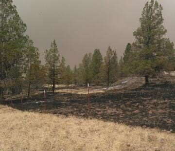 A sharp line is seen between the burned, blackened area of untended grass and the unburnt cropped grass where cattle had grazed.