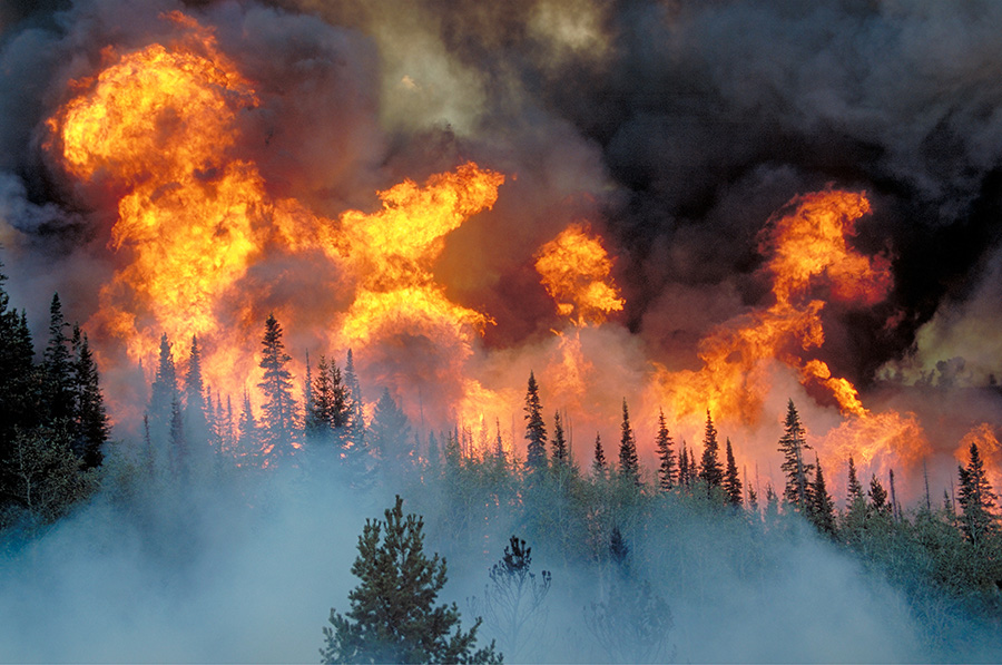 Flames climb hundreds of feet into the air above the treeline.