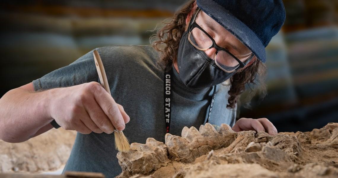 Sean Nies uses a paintbrush to brush soil away from mastodon teeth.