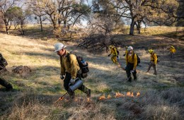 People walk through dried grass applying flames in a controlled burn.