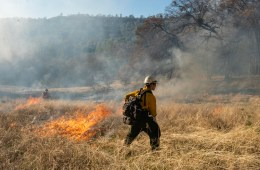 A young firefighter stands among burning brush during a prescribed fire.