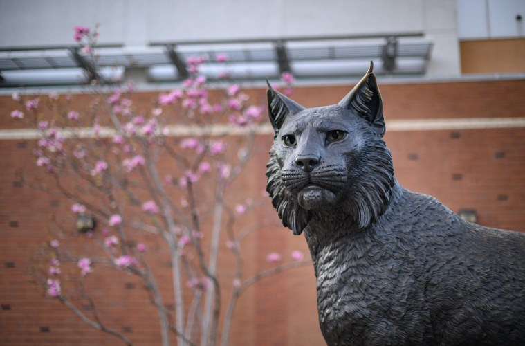 The Wildcat Statue stands in the foreground with blooming trees in the background.