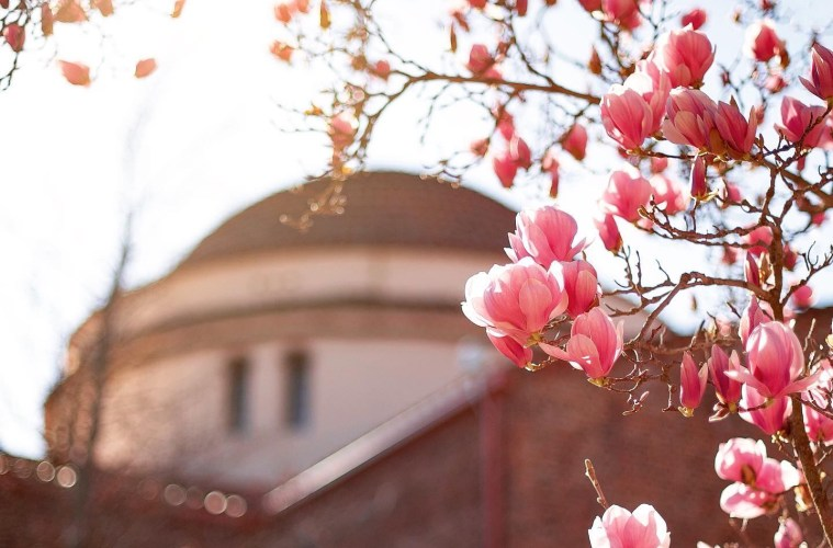 pink flowers bloom against a backdrop of the Kendall Hall rotunda