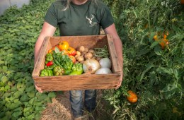 arms hold a box of produce in a garden.