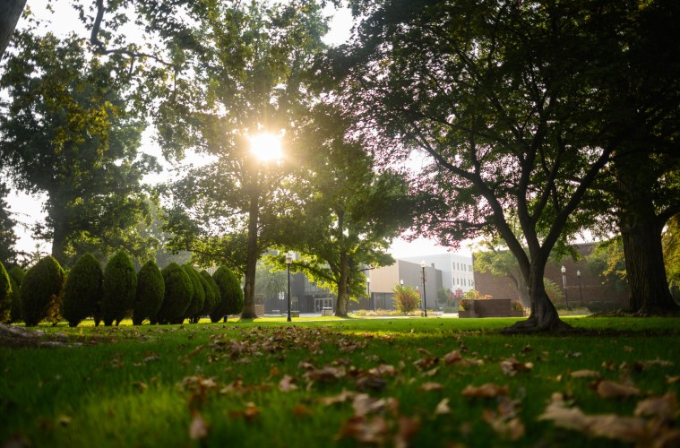 Sunbeams peek through leaves and branches of trees