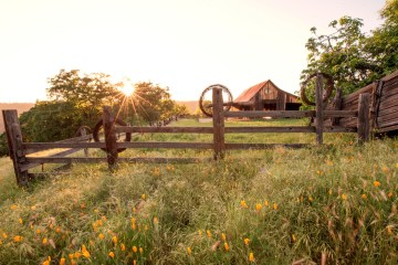 Sunshine breaks through the tops of trees over a ranch-style setting.