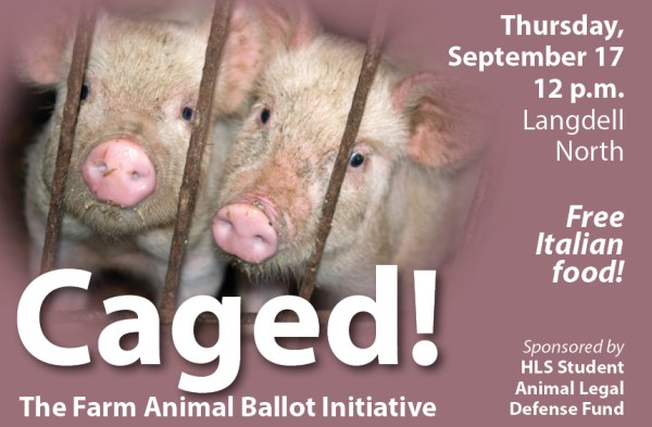 Kristen Stilt on the intersection of animals, law, and ...