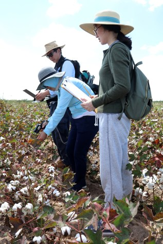 Examining fields