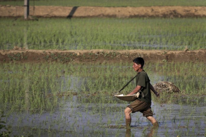 """North Korea to Face 860,000 Tons of Food Shortage this Year, will Go Through a """"Harsh Lean Period"""""""