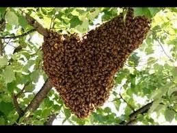 मधुमक्खी के हमले से मासूम बच्चे की मौत, एक गम्भीर