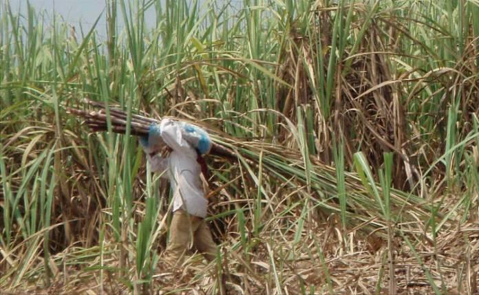 Nicaragua: Where sugar is not so sweet