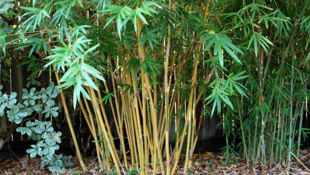 639x360_1418700091_bambu