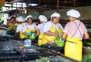 Nicaragua_bananas_women_0