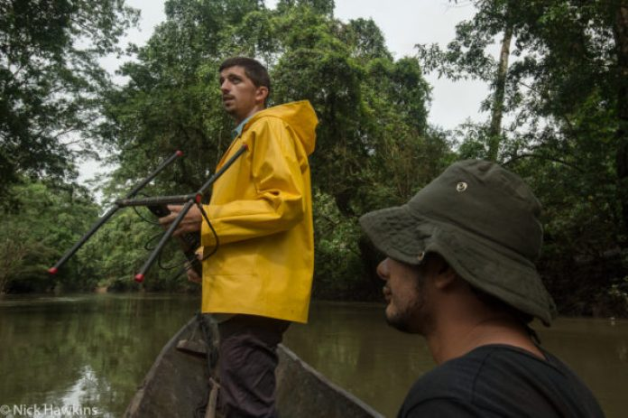 Chris Jordan of Global Wildlife Conservation uses radio telemerty to track collared tapirs along the Indian river in the Indio-Maiz Biological Reserve of Nicaragua.
