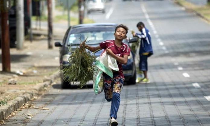 Sale of Eucalyptus leaves shoot up in Nicaragua to prevent coronavirus