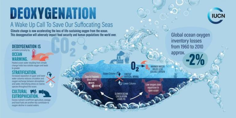 ocean deoxygenation