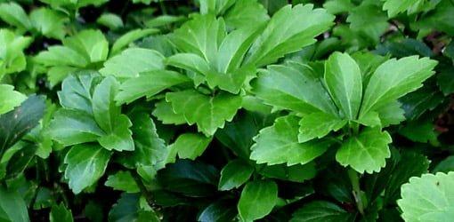 Healthy green plants need fertilizer