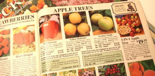 Spring Hill Nurseries gardening catalog.