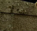 roofing and siding material