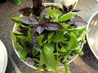 Basil leaves in bowl