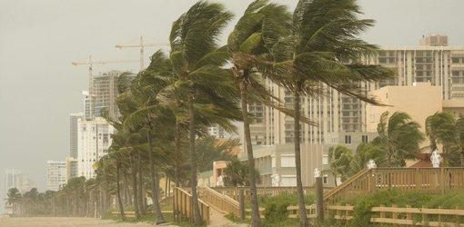 Hurricane winds lash palm trees along the coast.