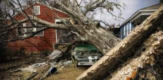 Tree fallen on house and car after hurricane.