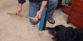 Window squeegee and dog on carpet.