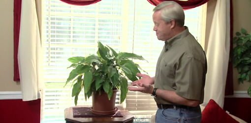 Danny Lipford standing in front of window with houseplant.