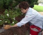 Tricia Craven Worley spreading wood ash around plants.