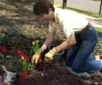 Tricia Craven Worley planting container grown plants in ground.