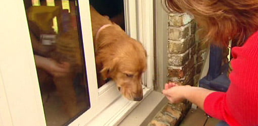 Pet door with dog coming out